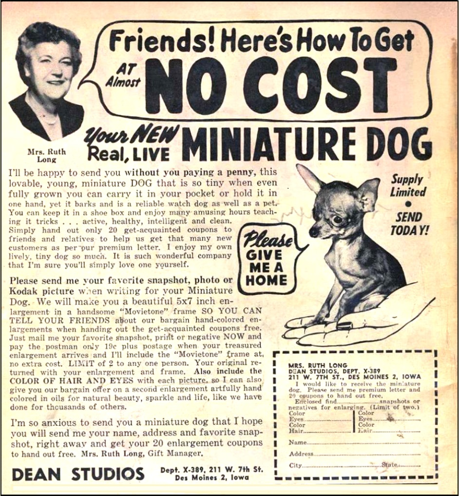 miniature dog ad